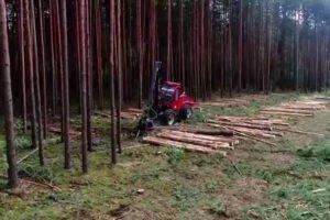 Read more about the article Беларусь: небольшой рост объемов заготовки круглого леса в 2020 году