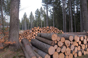 Read more about the article Максимальные цены на круглый лес