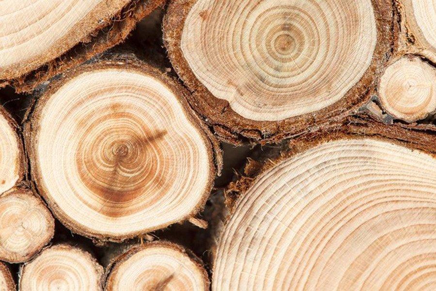 You are currently viewing Цены на древесину находятся на рекордно высоком уровне. Министерство откликается на призыв отрасли