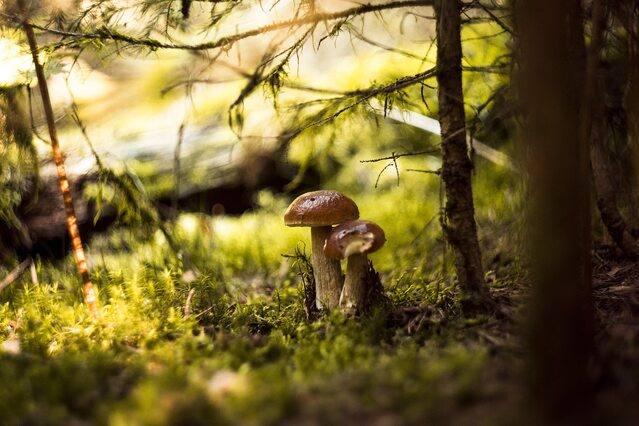 You are currently viewing В Польше ожидают негативных последствий от принятия новой стратегии ЕС по охране биоразнообразия