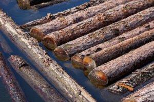 Read more about the article Пиломатериалы увеличиваются из-за проблем с поставкой после урагана Иды и сокращений на заводах