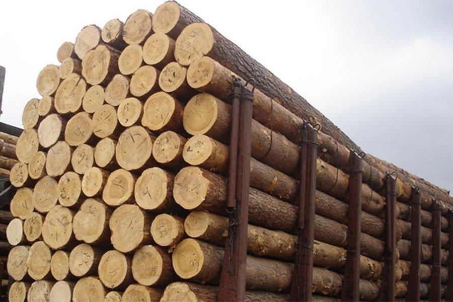 You are currently viewing Украина снимает запрет на экспорт круглого леса