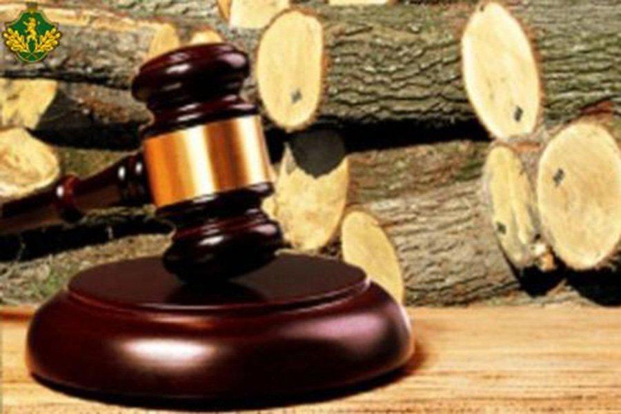 Read more about the article Итоги торгов необработанной древесиной за третий квартал 2021