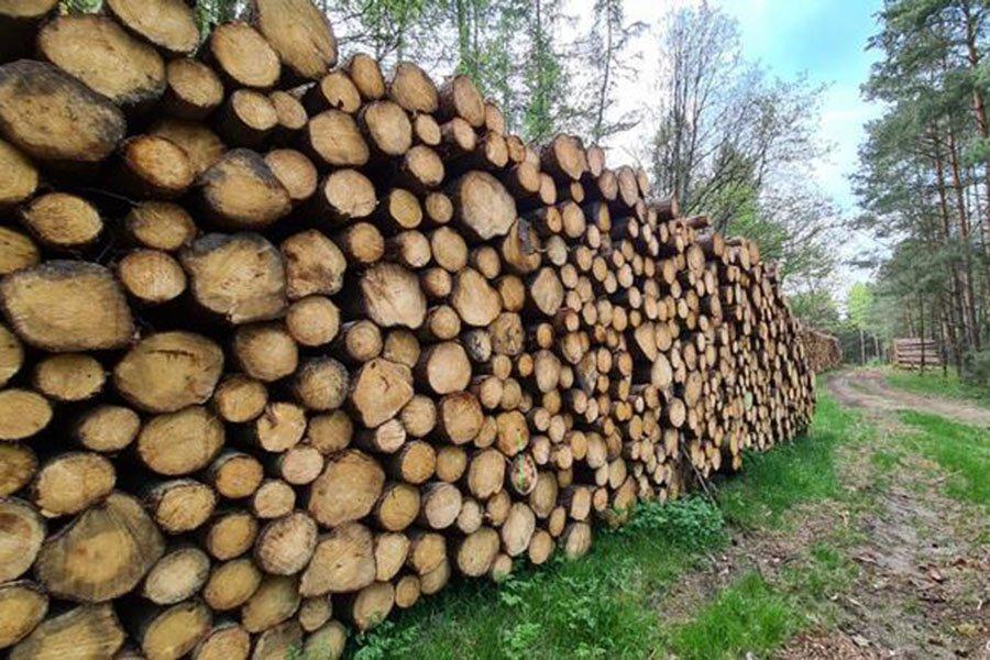 You are currently viewing Заготовка зеленой древесины на юге Германии замедлена из-за ограничений на вырубку и праздников