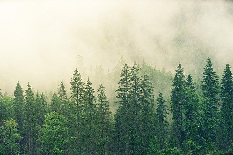 Read more about the article С 2022 года в России изменится лесоустройство