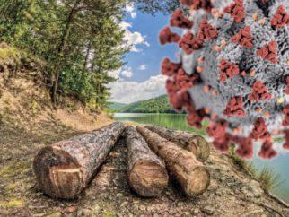 You are currently viewing Коронавирусная «встряска» для лесной отрасли