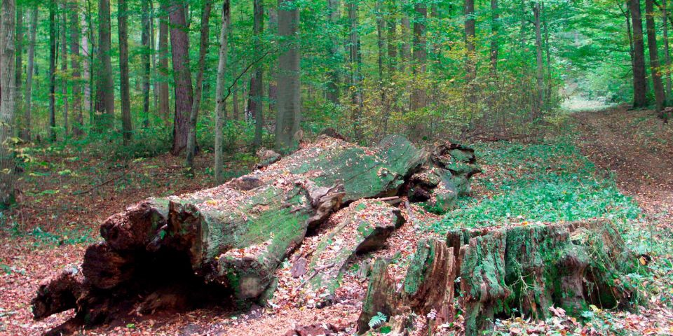 Read more about the article Реструктуризация леса и исследования древесины в Германии