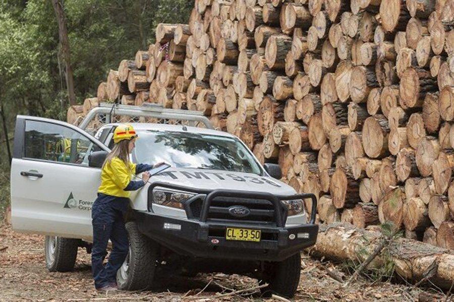 Read more about the article Увеличение предложения древесины хвойных пород для обеспечения собственной лесопильной промышленности
