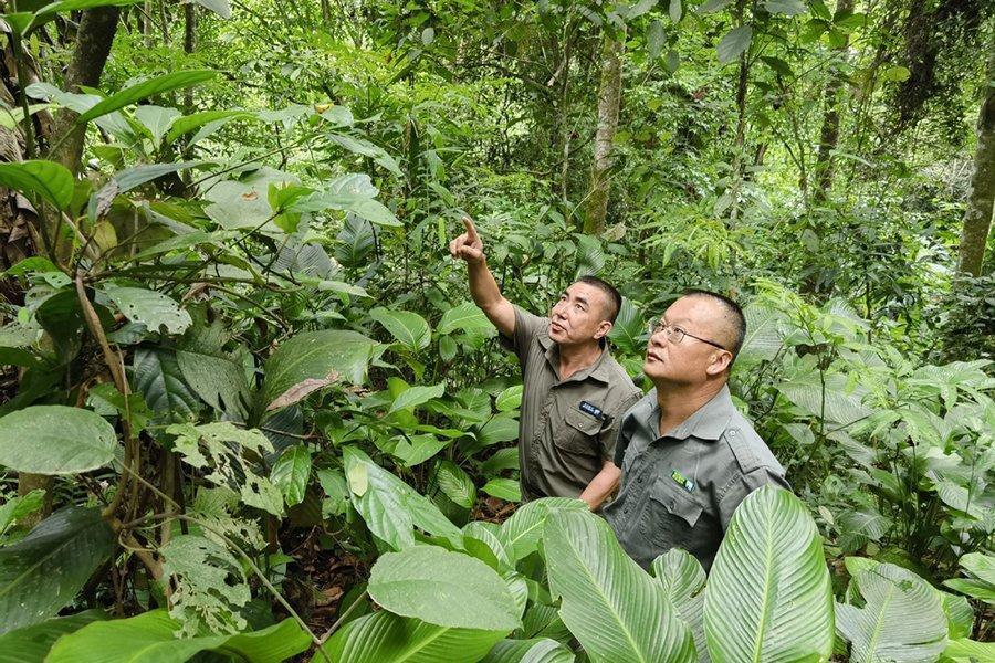 You are currently viewing Государство ужесточает управление лесным хозяйством
