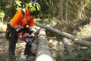 Read more about the article Швеция ожидает большего объема заготовленной древесины