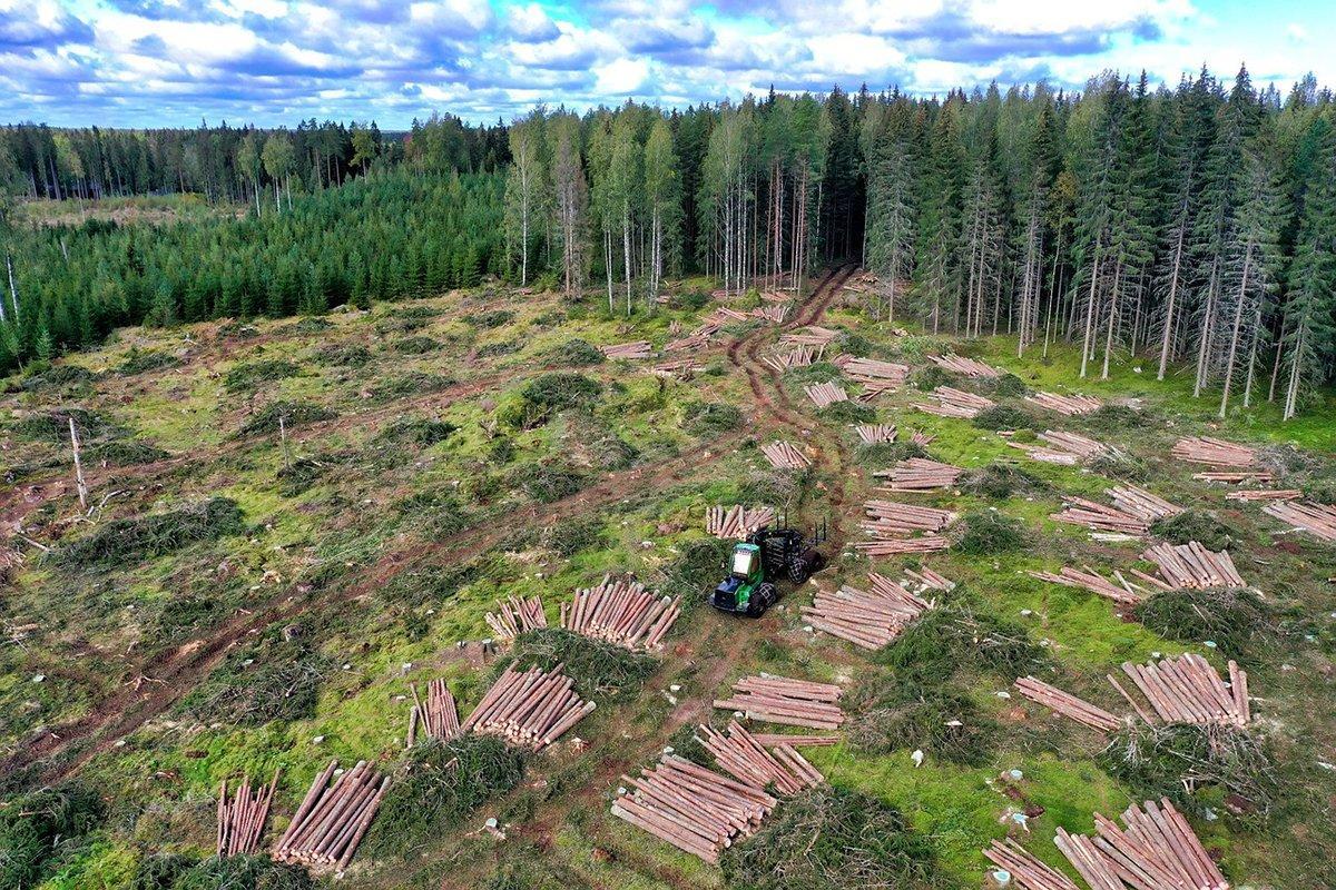 You are currently viewing Прибыль частных лесов в Финляндии превысила 1,5 млрд евро