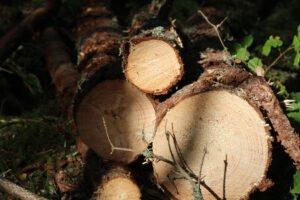 Read more about the article Цены на балансовую древесину хвойных пород в мире выросли больше, чем на балансовую древесину лиственных пород