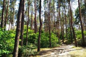 Read more about the article Украина и ЕС договорились решить вопрос о моратории на экспорт необработанной древесины, применив меры, необходимые для выполнения соответствующего решения Арбитражной комиссии