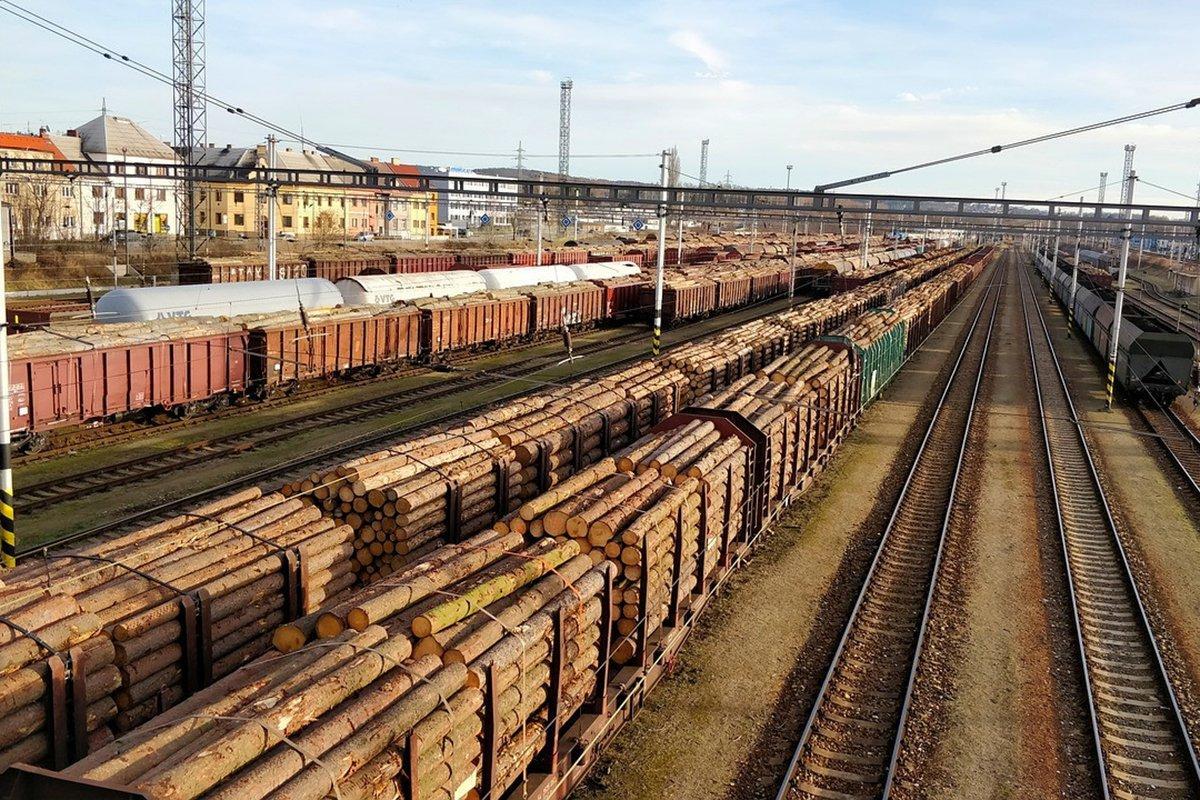 You are currently viewing В РЖД ожидают сокращение экспорта леса по железной дороге