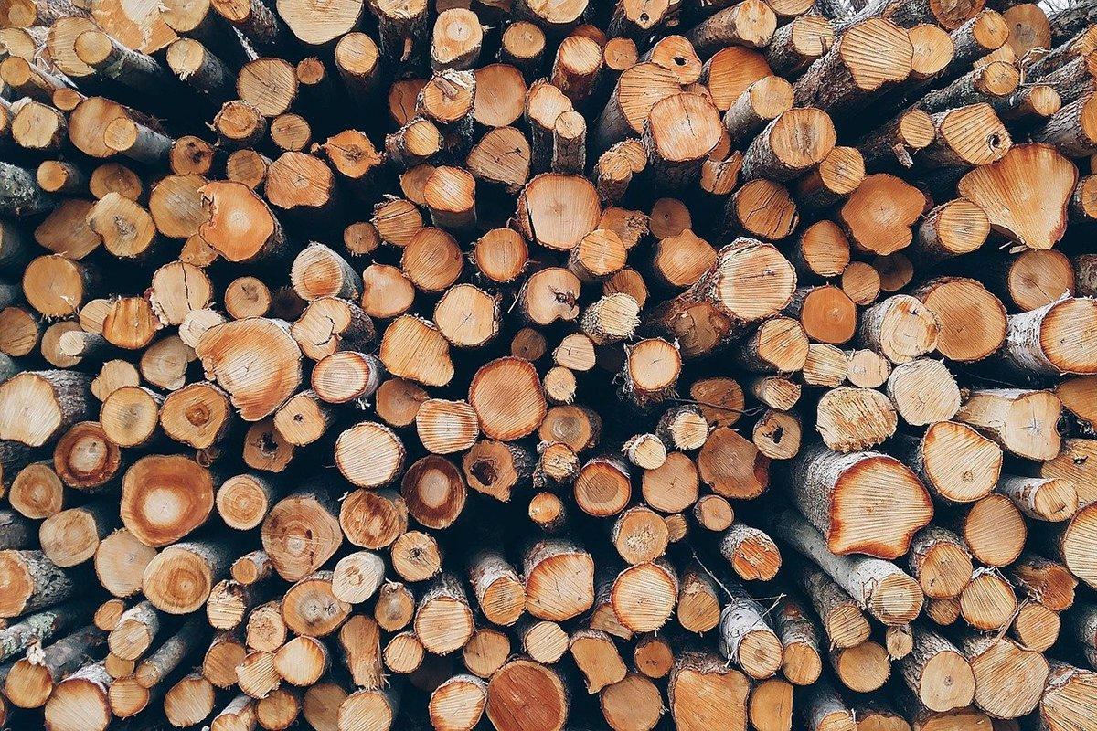 You are currently viewing Финляндия на 26% увеличила объем лесозаготовки в августе 2021 года